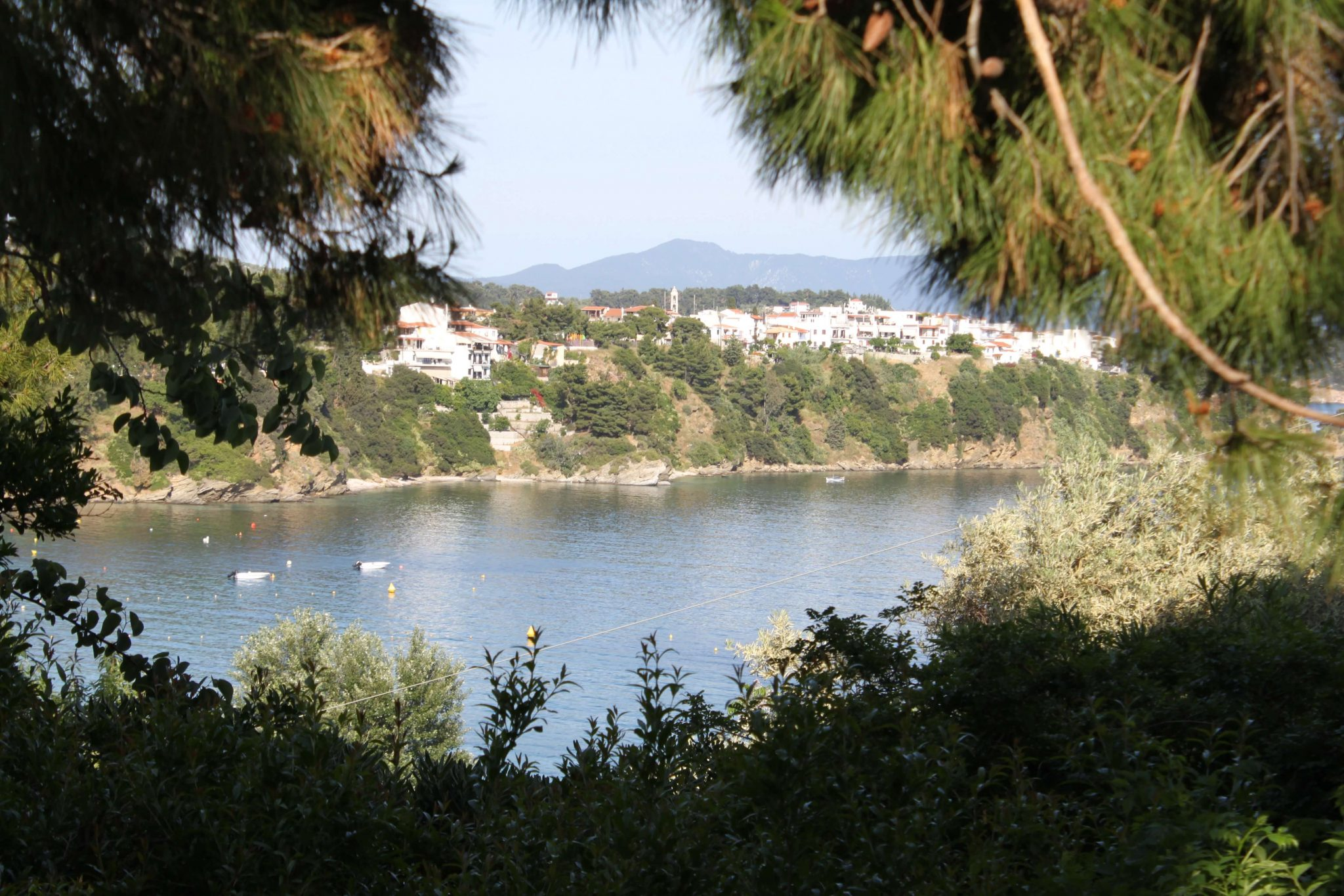 Pinetree view1